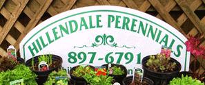 Hillendale Perennials