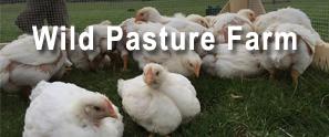 Wild Pasture Farm